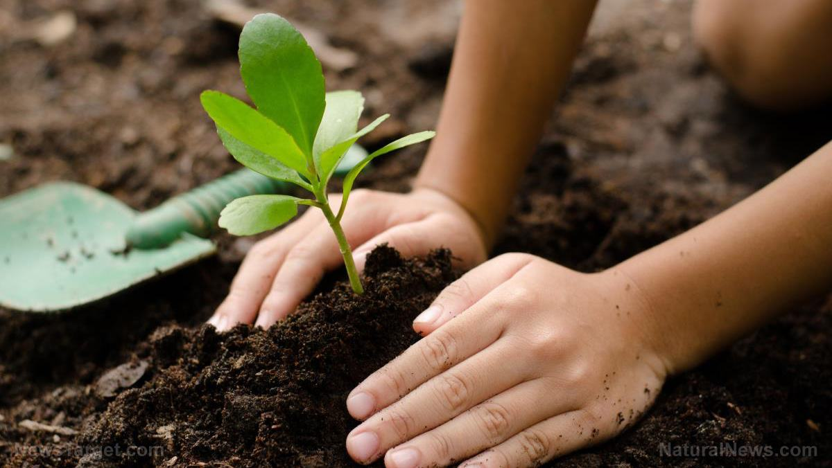 Plant-Tree-Seed-Kid-Hand-Garden-Seedling
